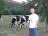 """Mucche al Pascolo fuori il Camping """"Le Mouline"""""""