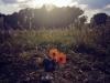 Il Puffo Fermin al Parco della Caffarella