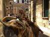 Fermin a Lecce