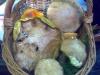 Canestro di Fine Giornata - 17 Luglio 2010