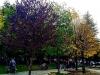 Autunno 2016 - Giardini di Tagliacozzo